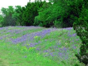 purplewildflowers