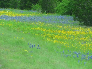 yellowandbluewildflowers