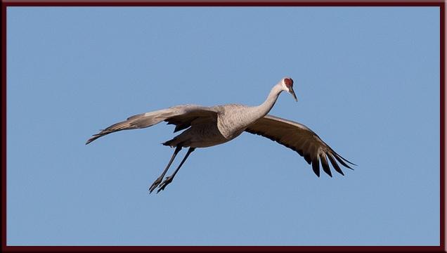 crane-landing1