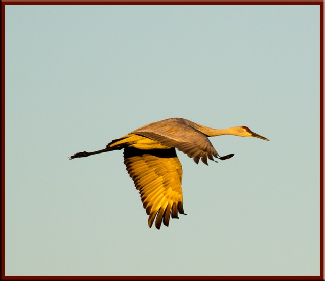 single-crane-in-flight