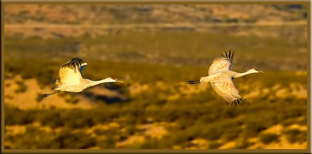 two-cranes-in-flight