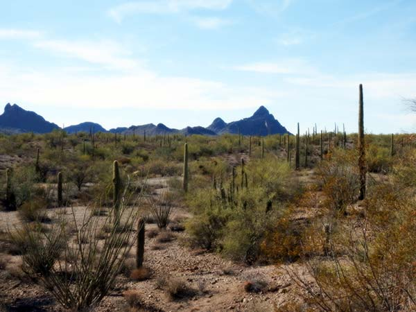 desertscene1